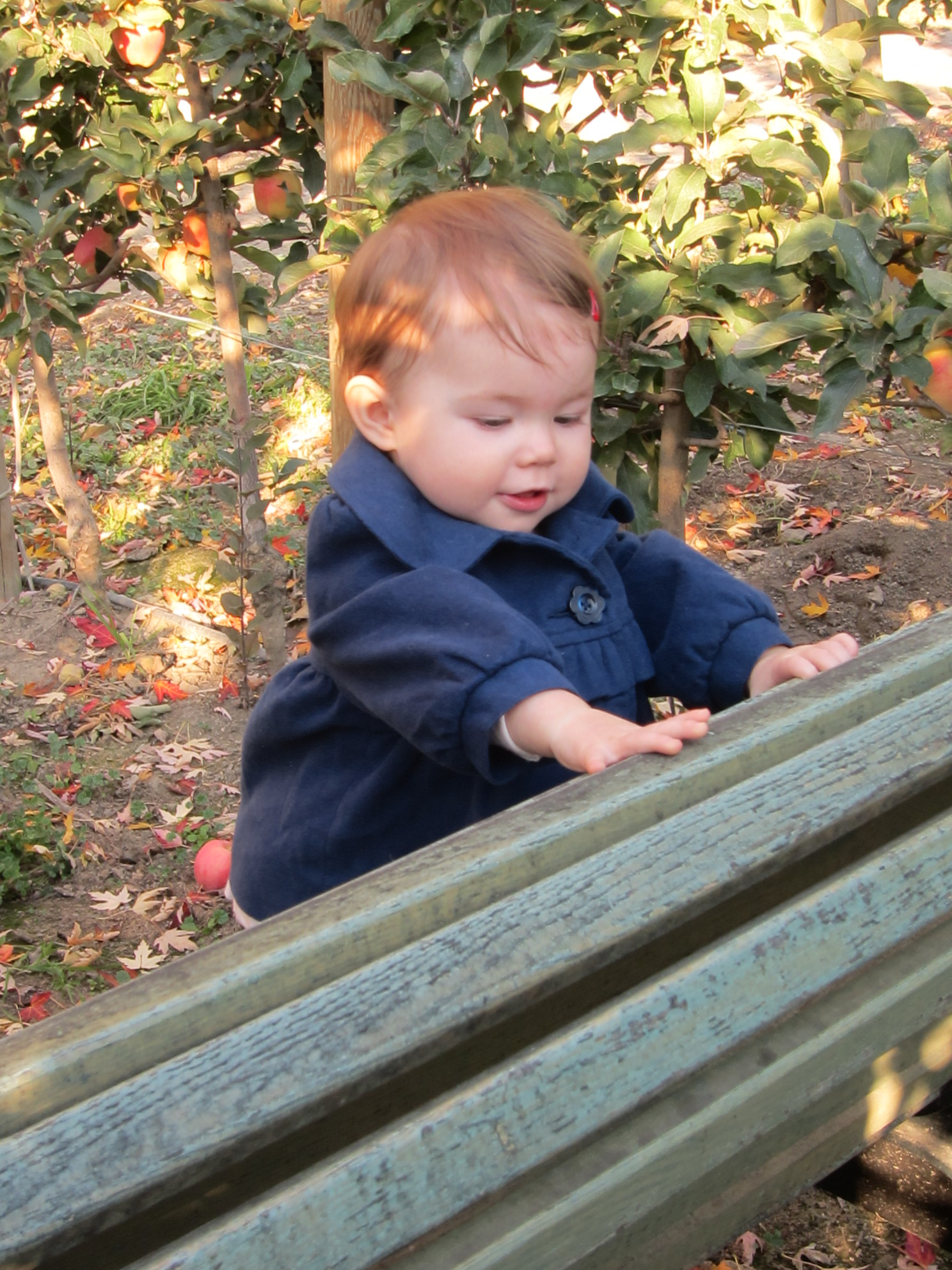 fall afternoon in the orchard