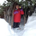 ambrosia in the cold