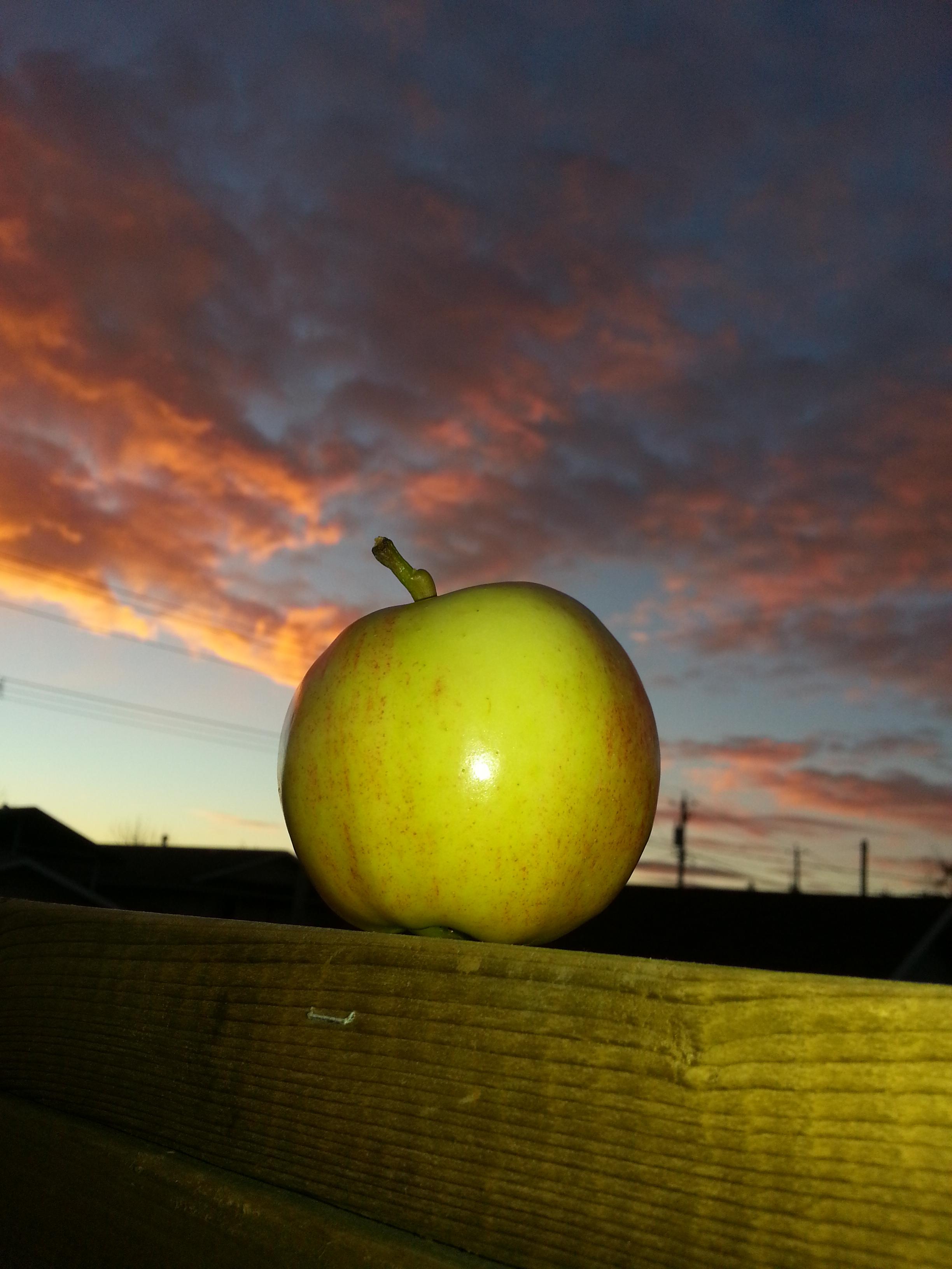 ambrosia apple sunrise