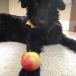betty spaghetti and the ambrosia apple