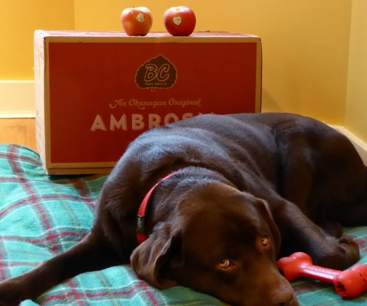 cedar loves ambrosia apples