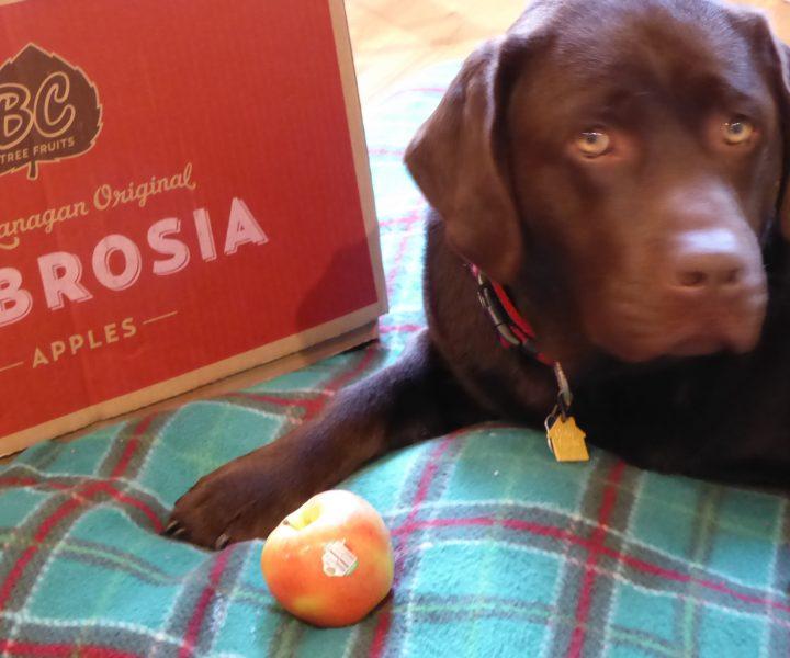 cedar loves ambrosia apples