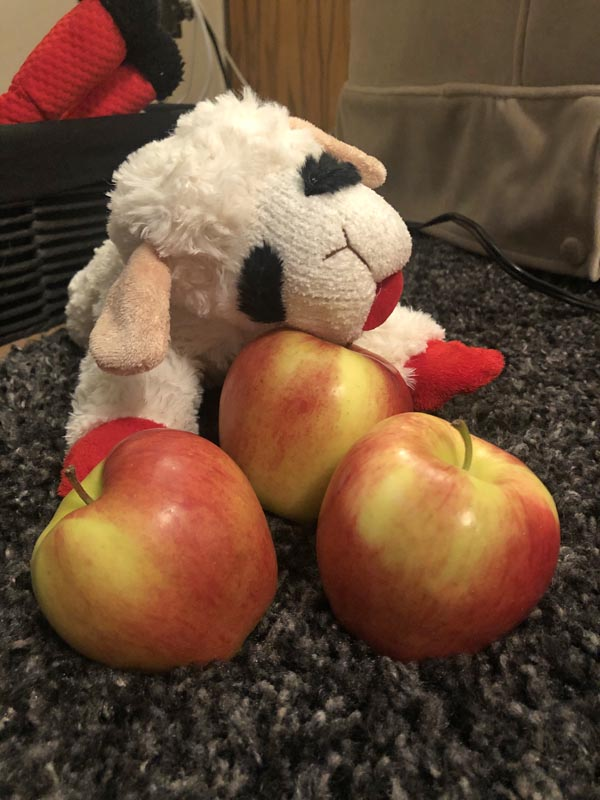 drunk on ambrosia apples