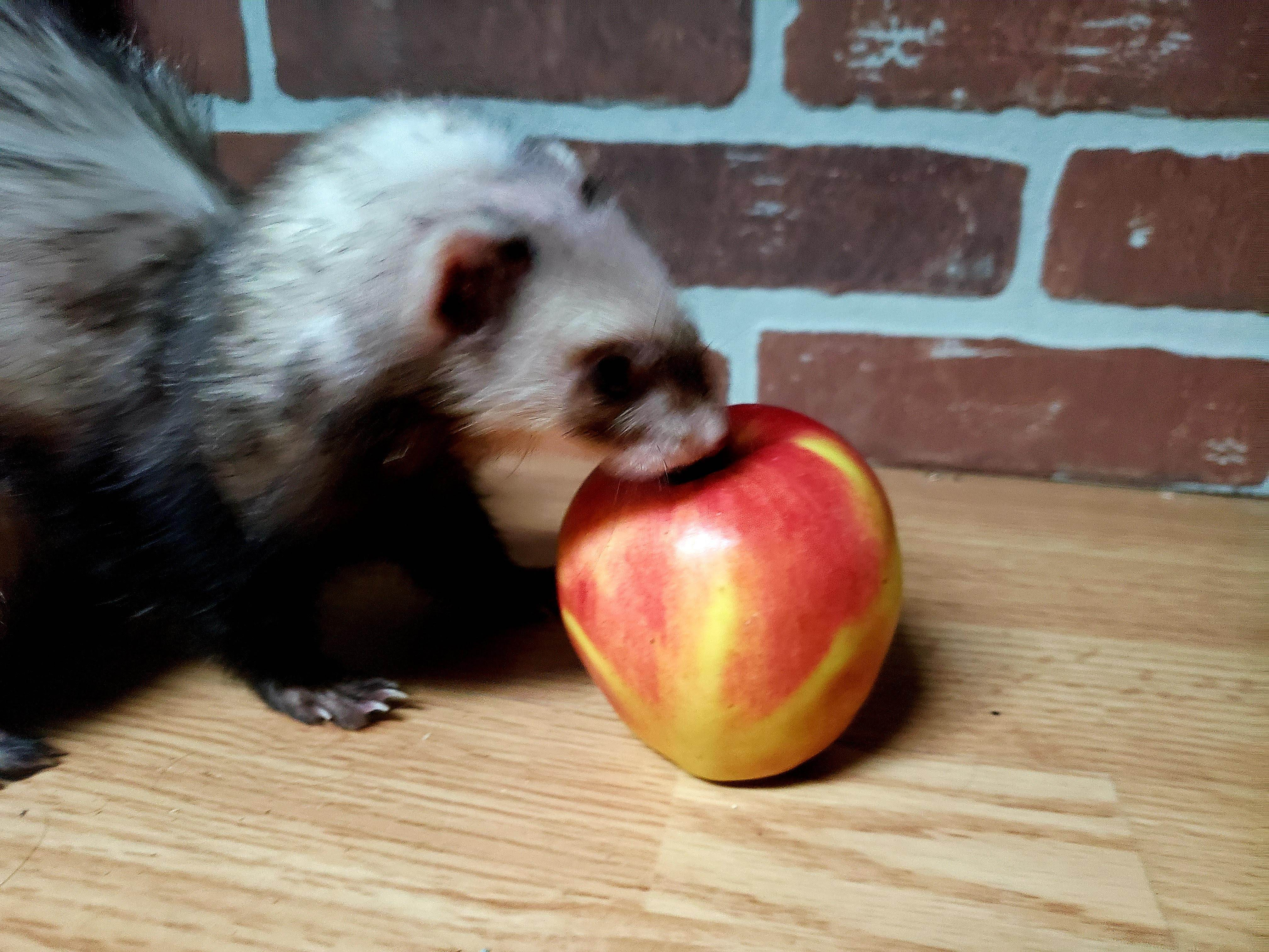 don t let a sneaky weasel steal your apple